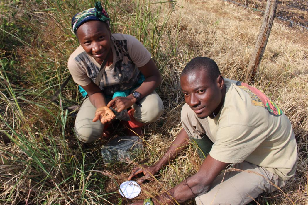 researchers in the nigerian montane forest project