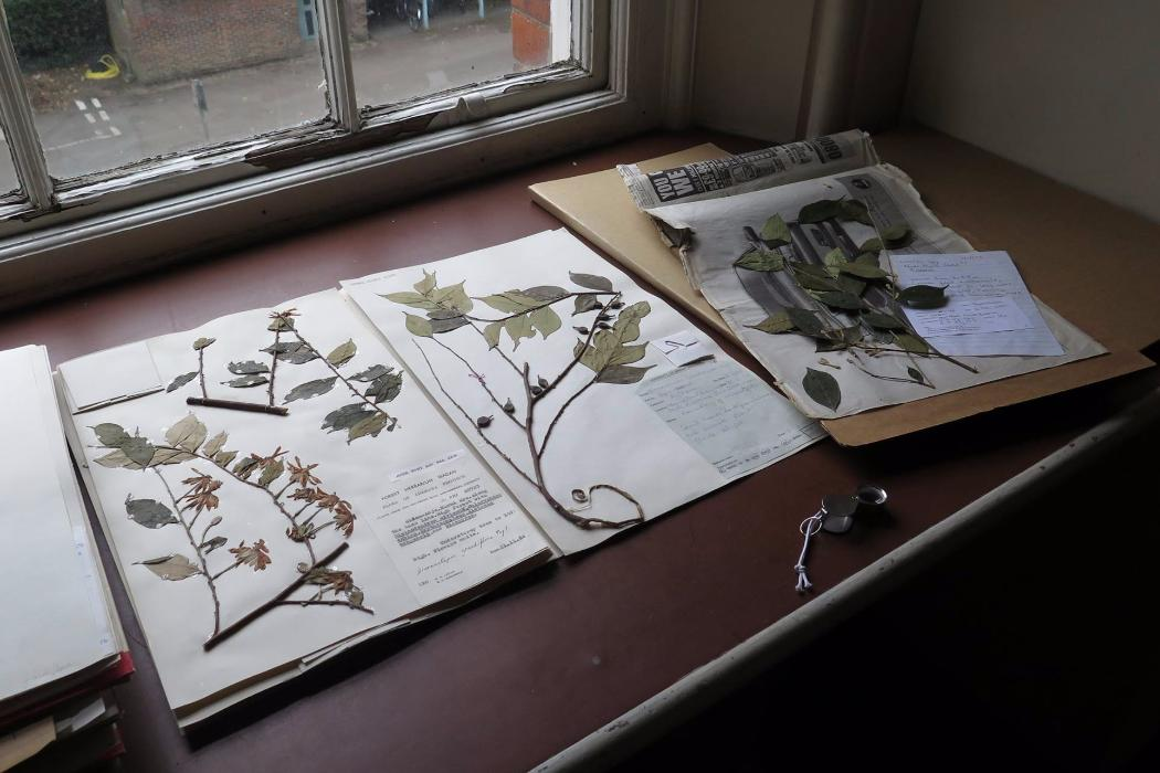 pressed leaves from nigerian montane forest