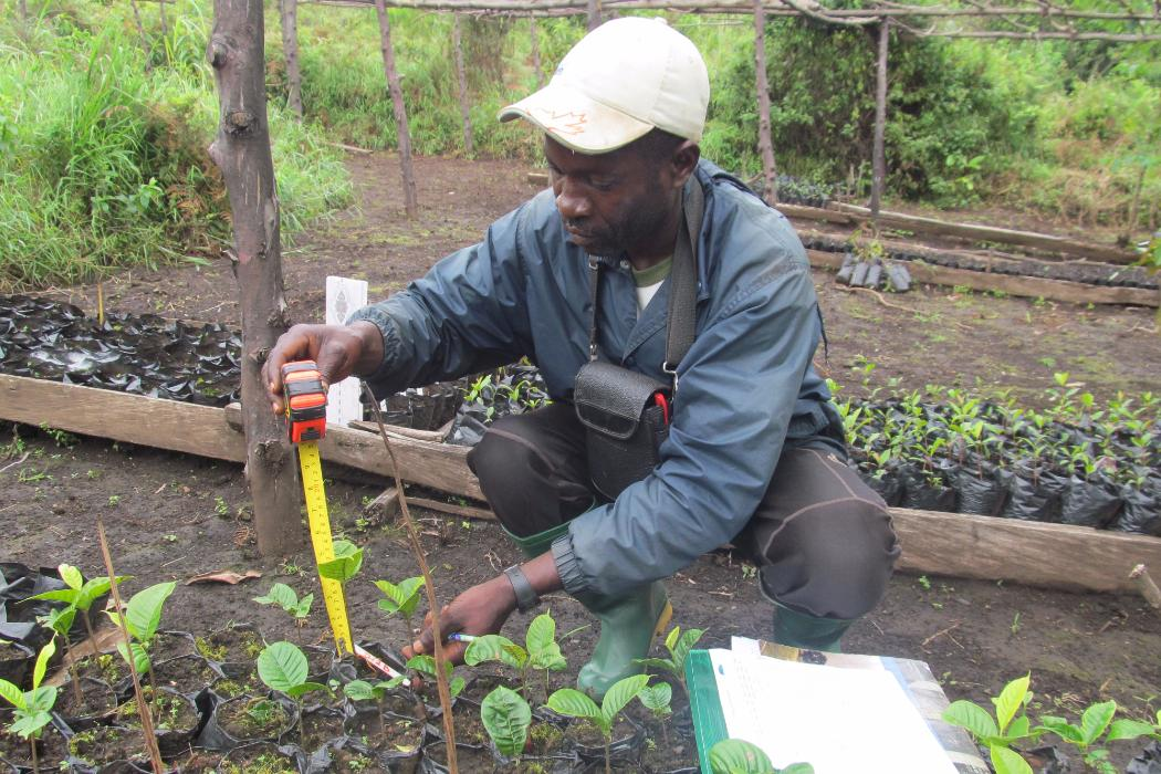 researcher at work in reforestation project