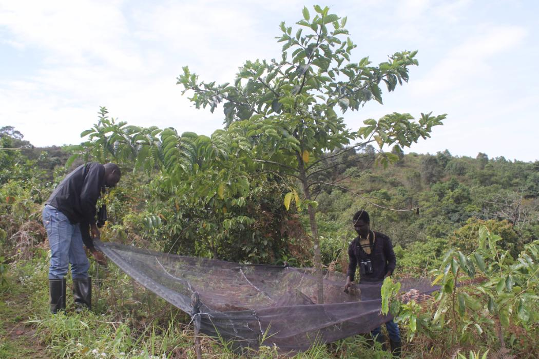 researchers in montane forest