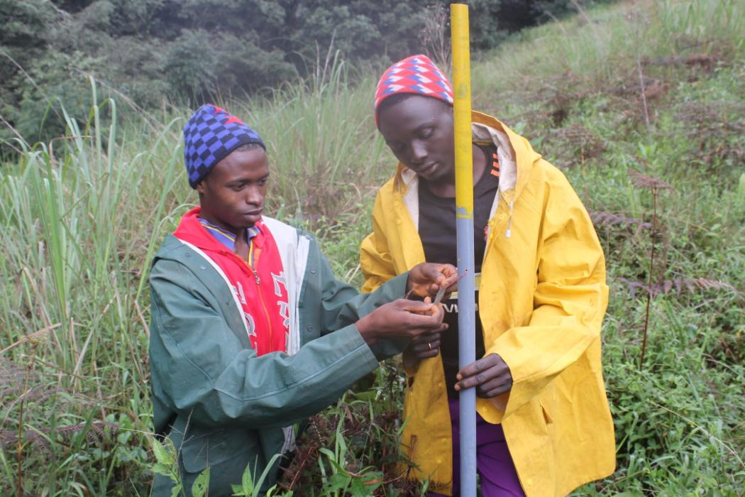 researchers working on plot in nigerian montane forest