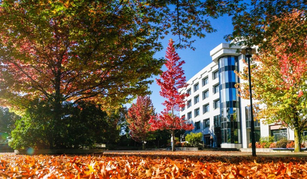 Meremere building with autumn leaves