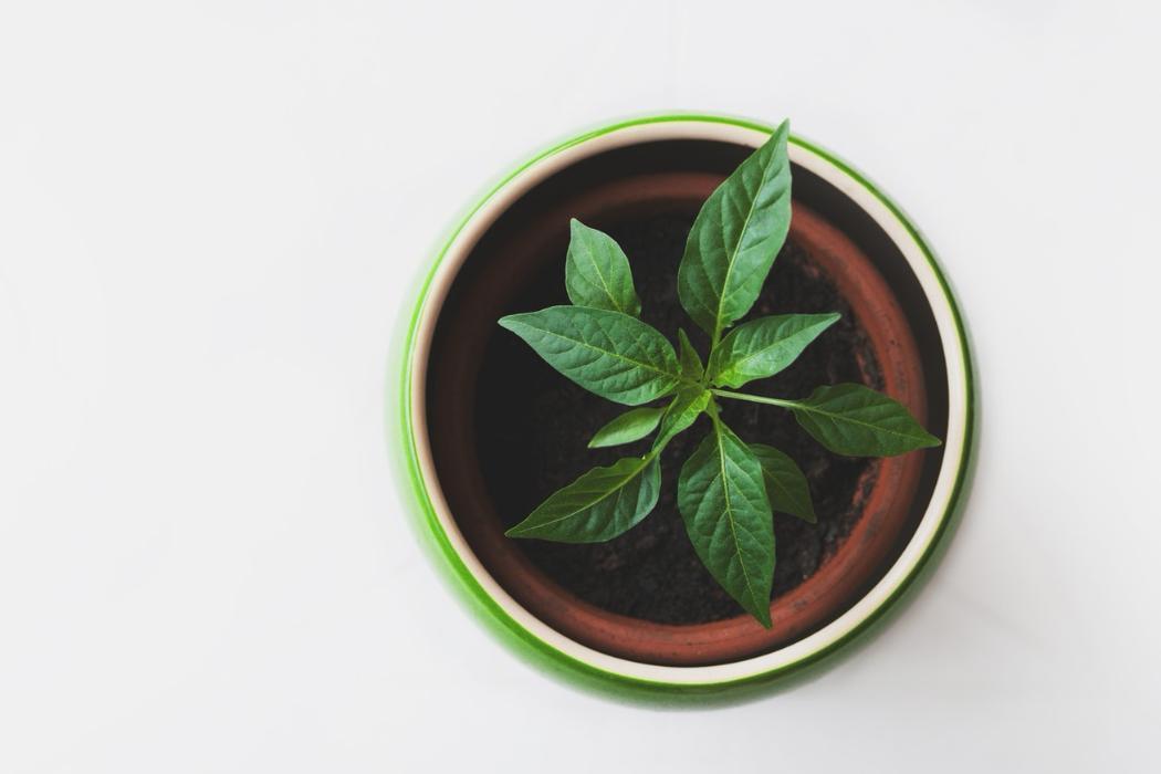 UCE Sustainability Plant Top Angle