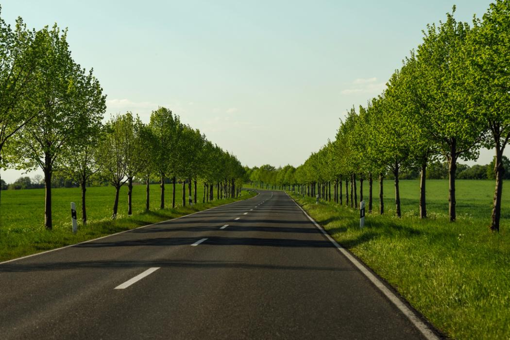 avenue with trees