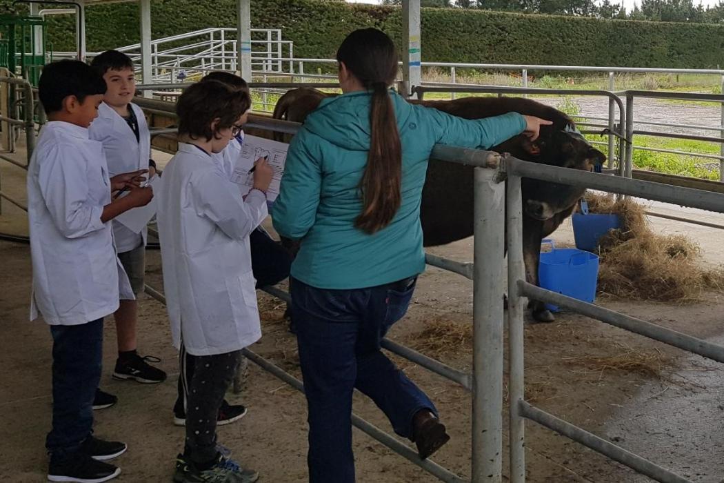 Children's University kids look at cows