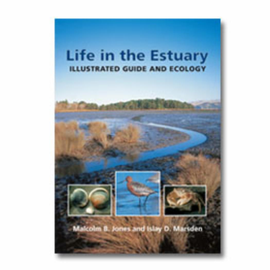 Life in the Estuary