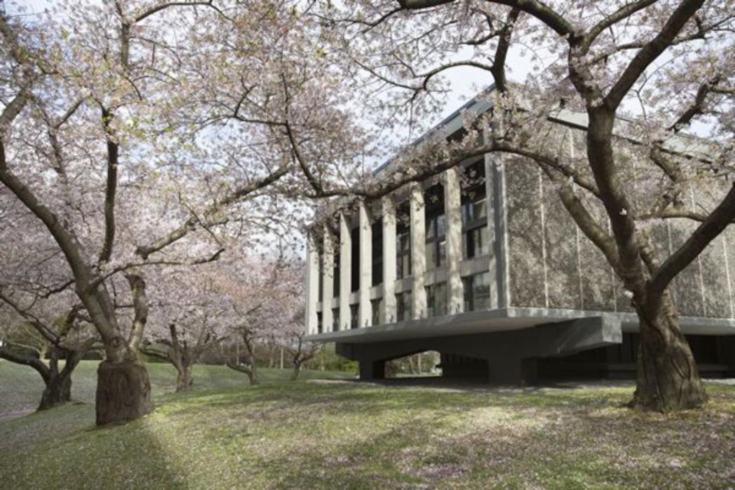 12 cherry blossom logie building