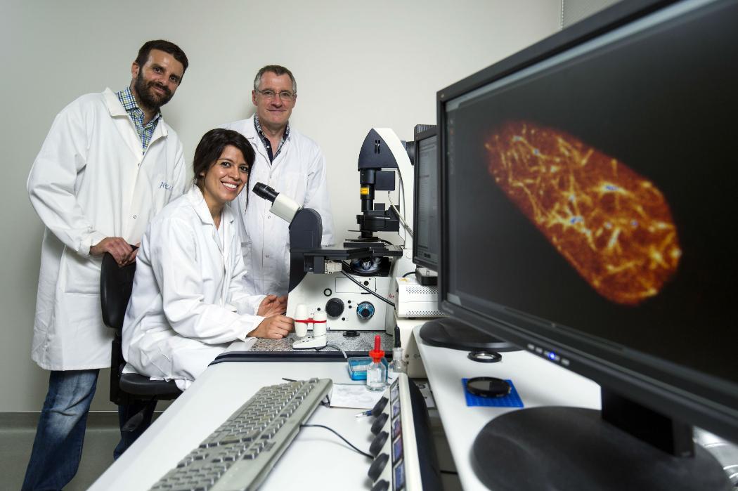 nanotech research report fungi