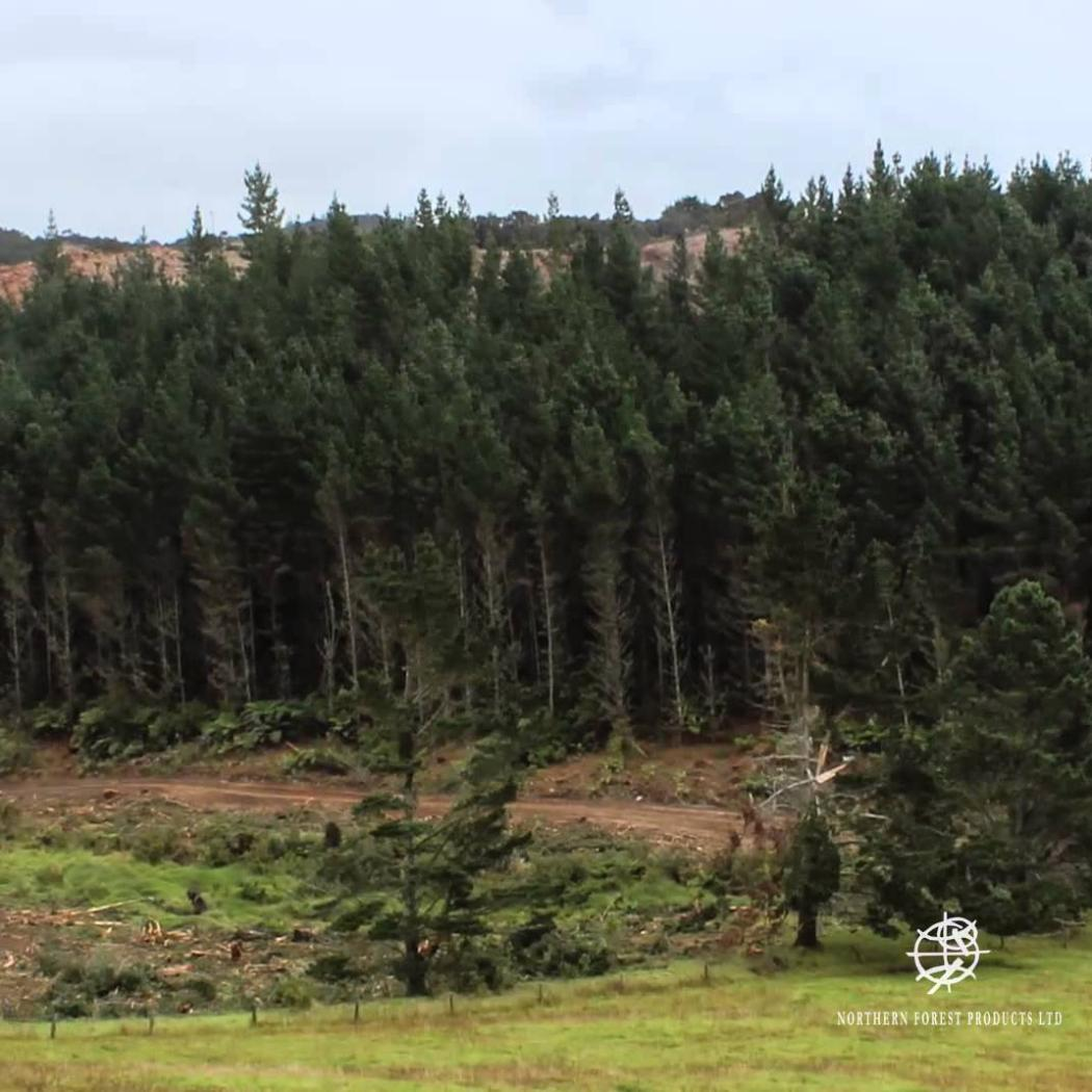 NFP Woodlot harvesting