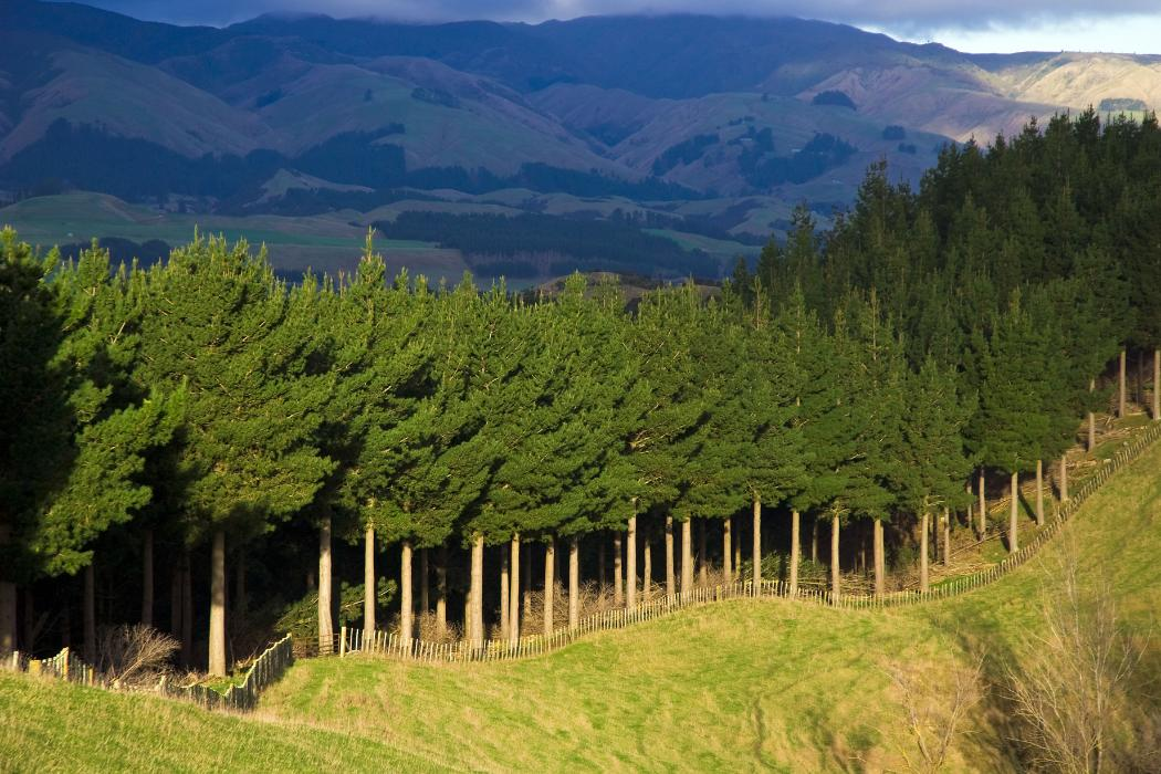 forestry science research