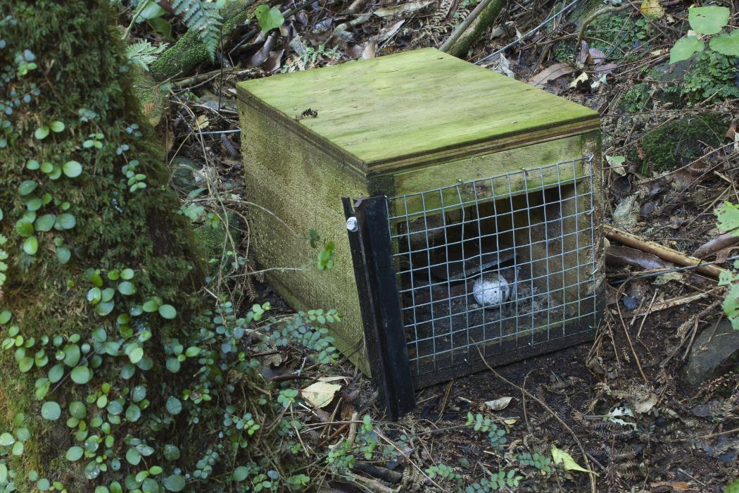Pest control trap in New Zealand