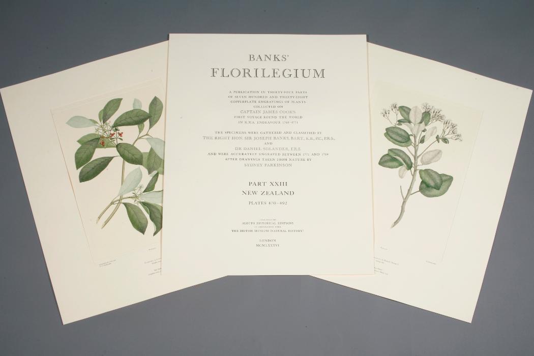 Banks florilegium engravings