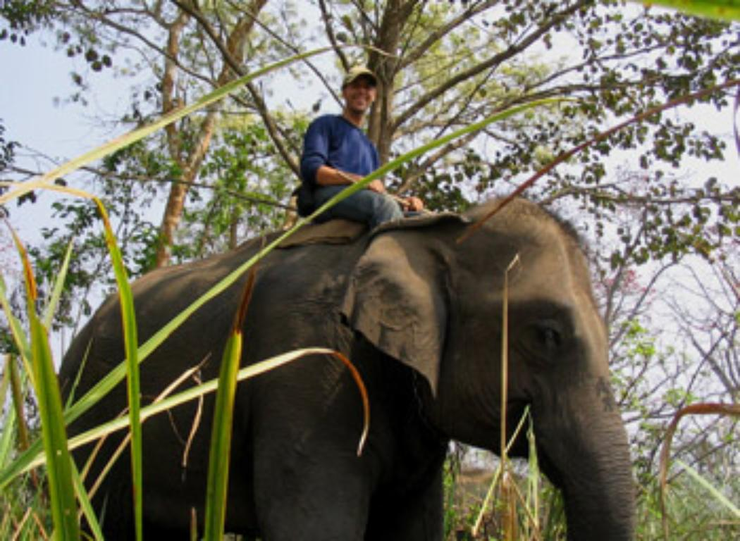 Elephant research to feature in documentary