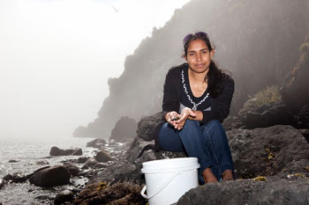 Mussel power - fit for monitoring Kiwi coastlines