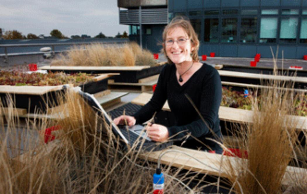 UC research into green planted-roofs