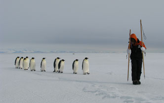 Project to help Antarctic seals and penguins
