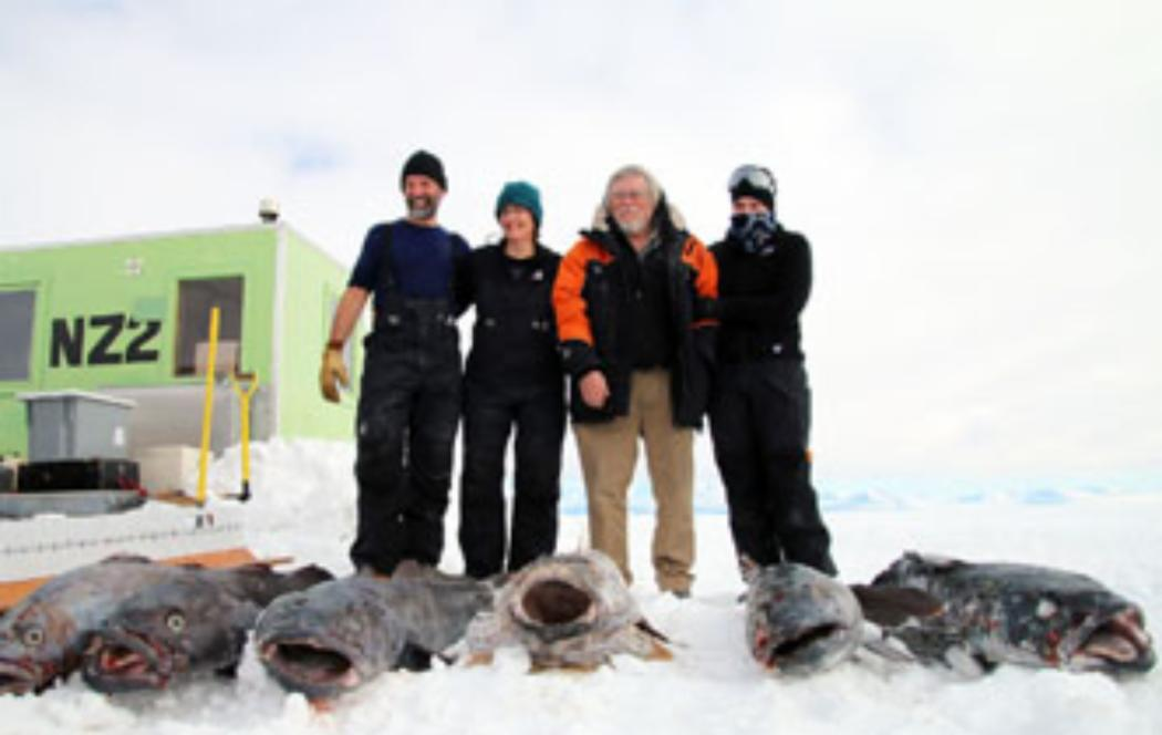 Antarctic toothfish, lost - and found