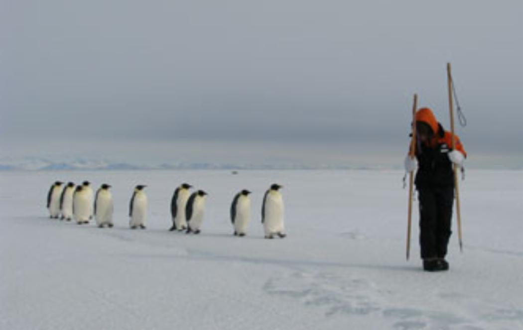 Symposium to look at the future of the Antarctic