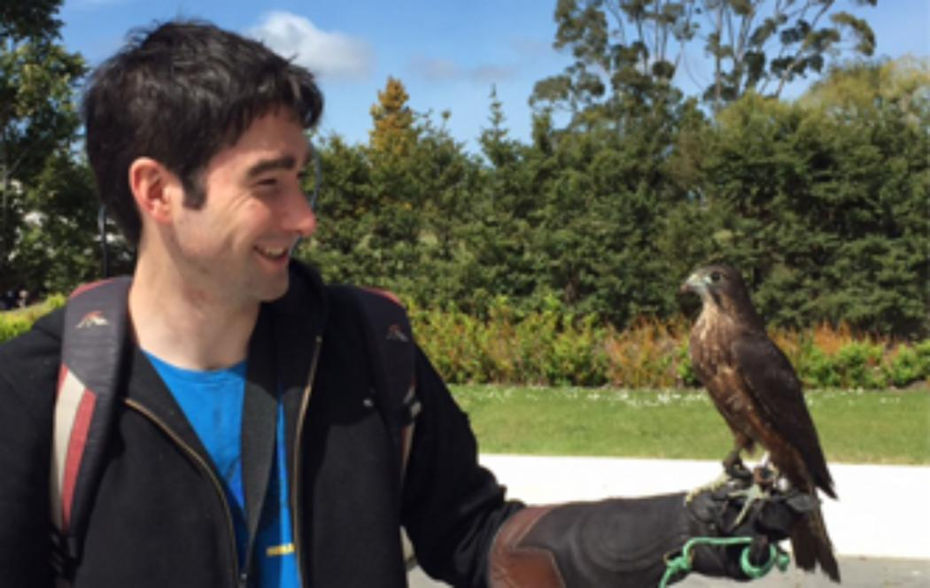 Frequent falcon flights to prevent problem pigeons