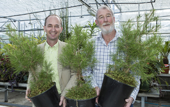 Lone Pine seedlings to mark the 100th anniversary  - Imported from Legacy News system