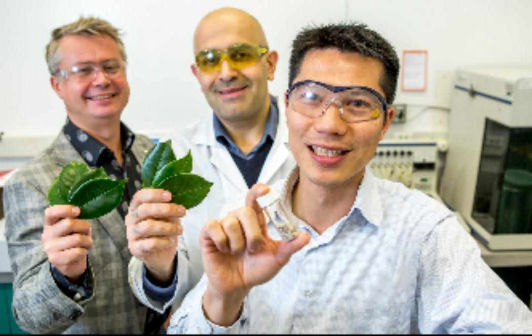 UC researchers take leaf from nature to catch CO2