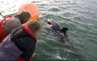 UC marine scientists come to aid of lost Orca calf