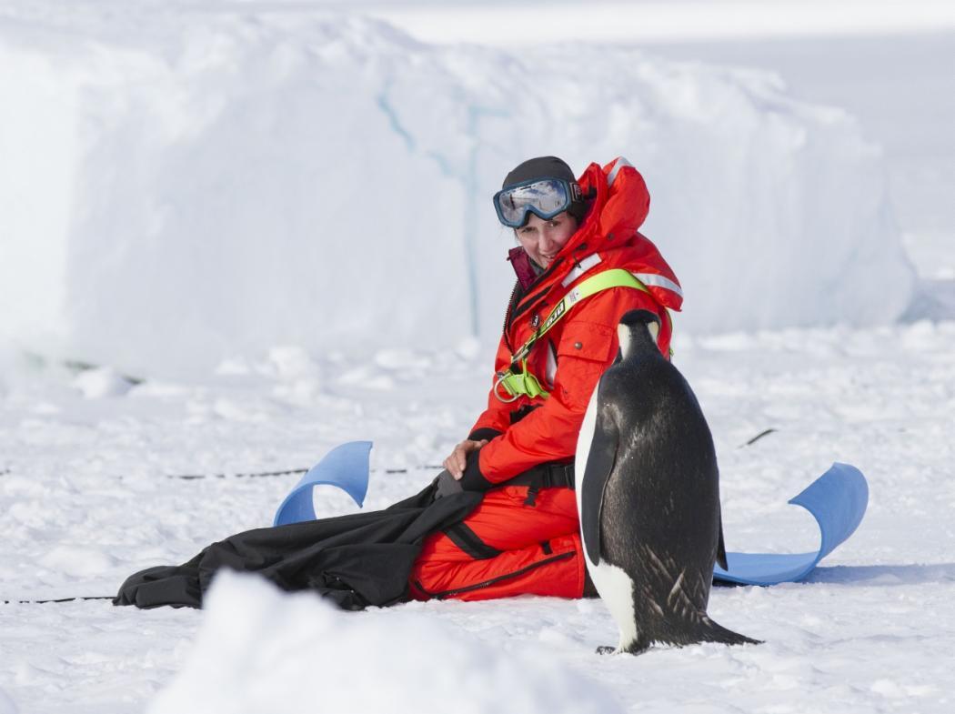 Regina Eisert penguin sm
