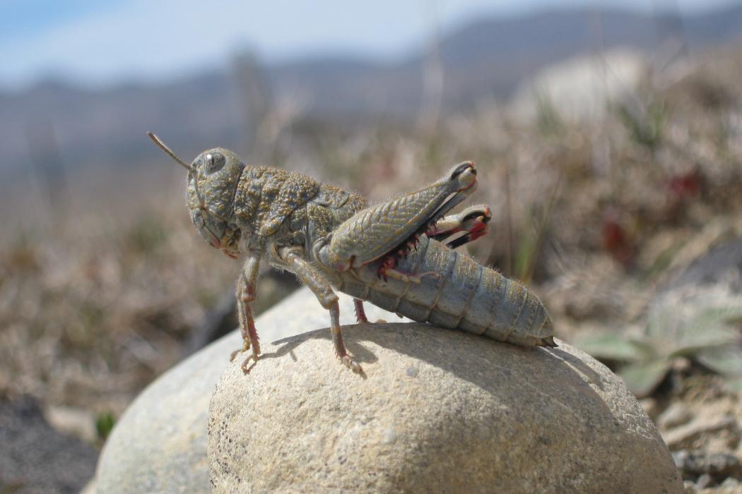 grasshopper_NWS_block