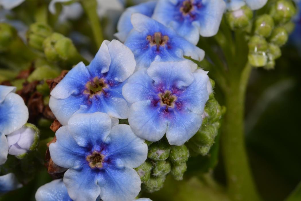 Macro photo of blue flowers, Biology