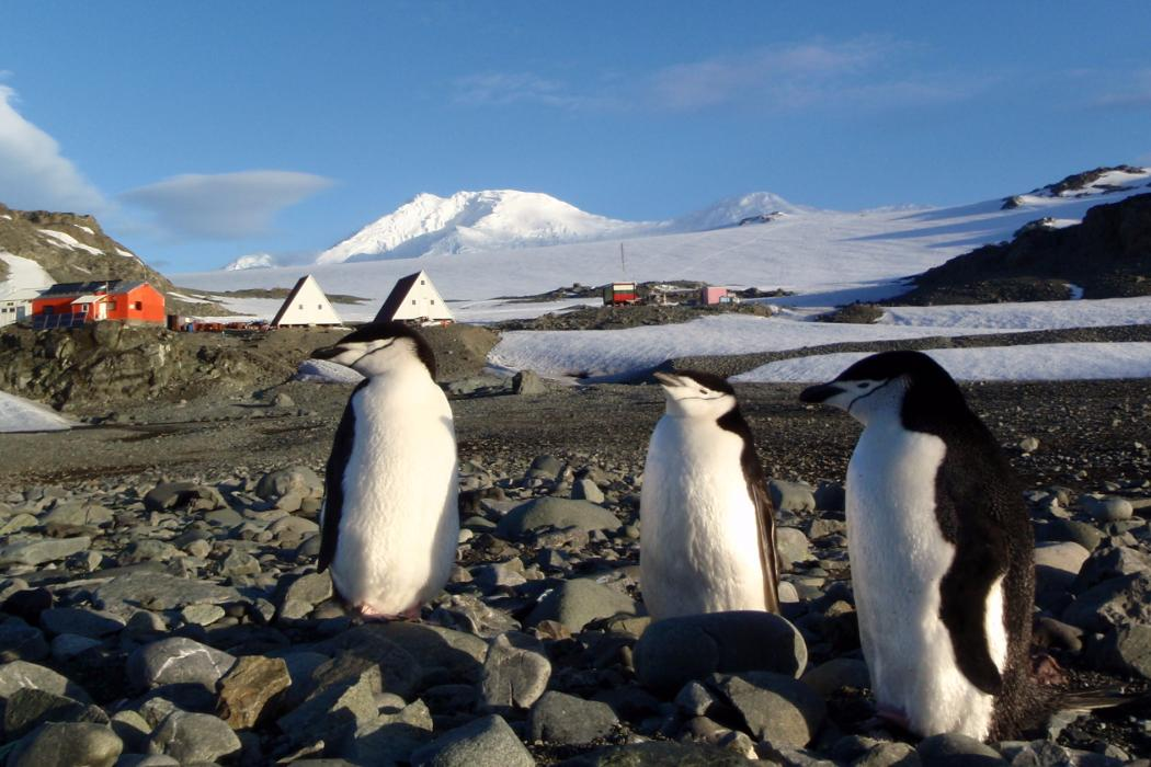 penguins near huts in Antarctica