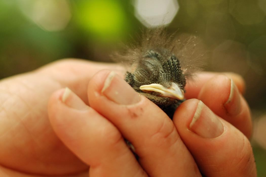 Person holding baby bird, Biology