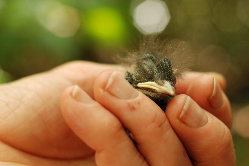 Small bird in persons hand, Biology
