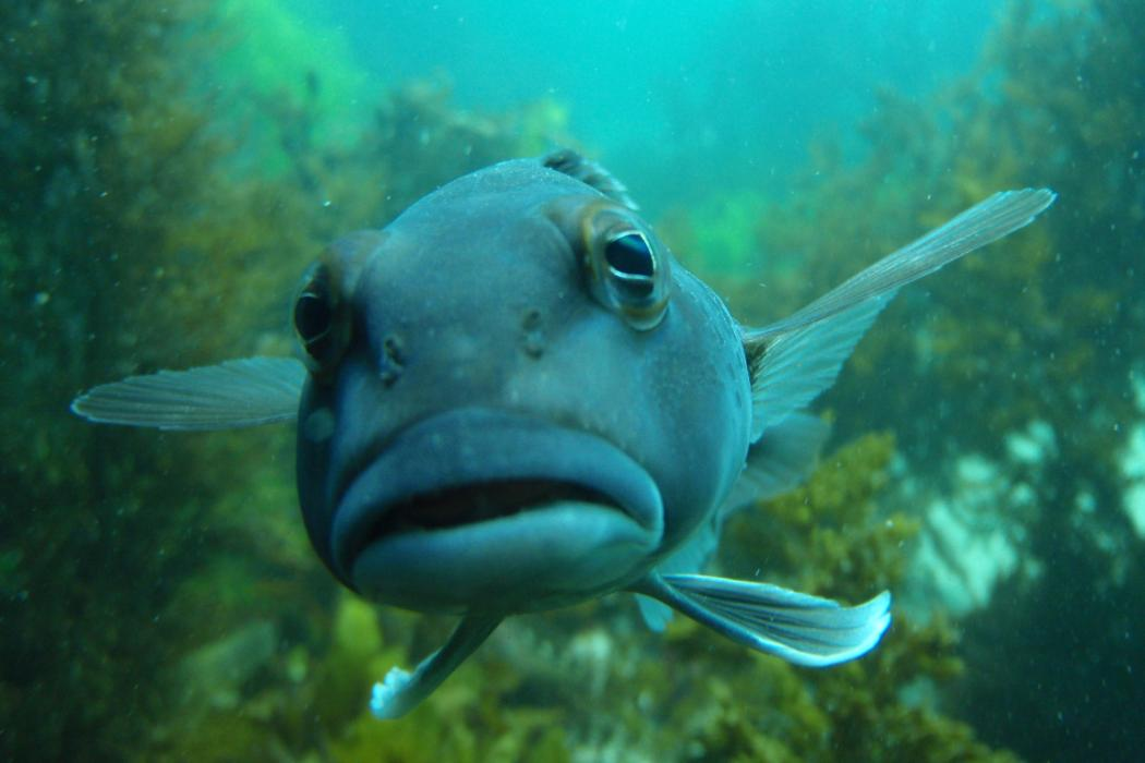 Close up underwater shot of a fish, Biology