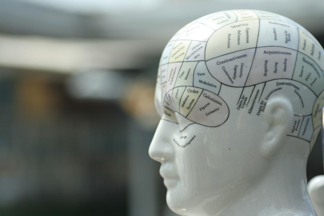 Mannequin head with brain anatomy drawn on
