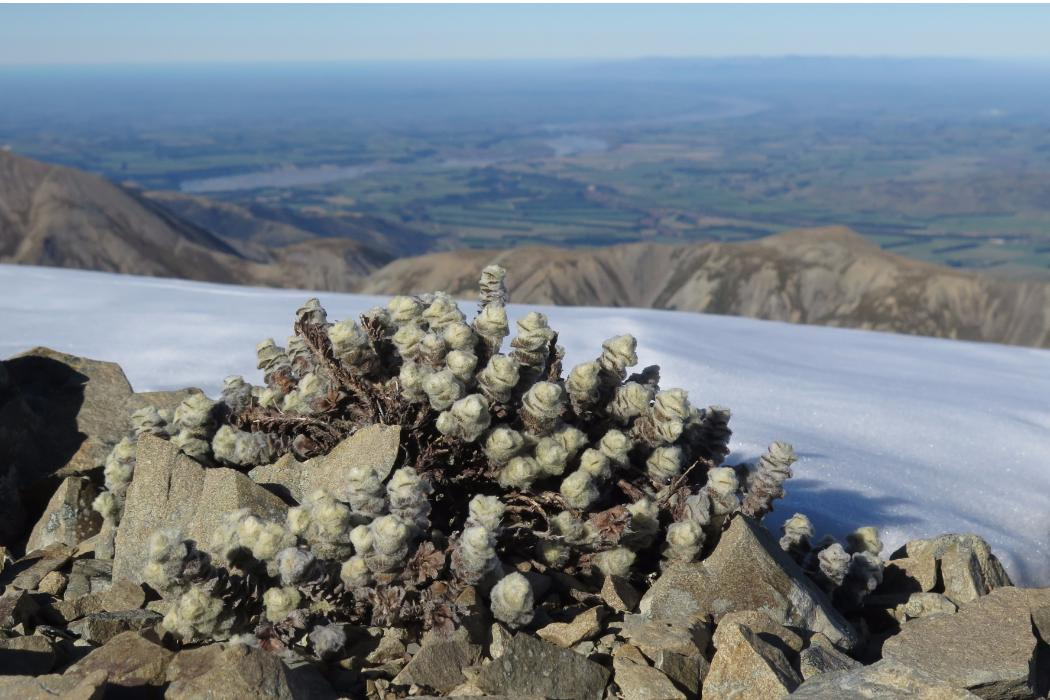 Interesting plant growing on a mountain top, Biology